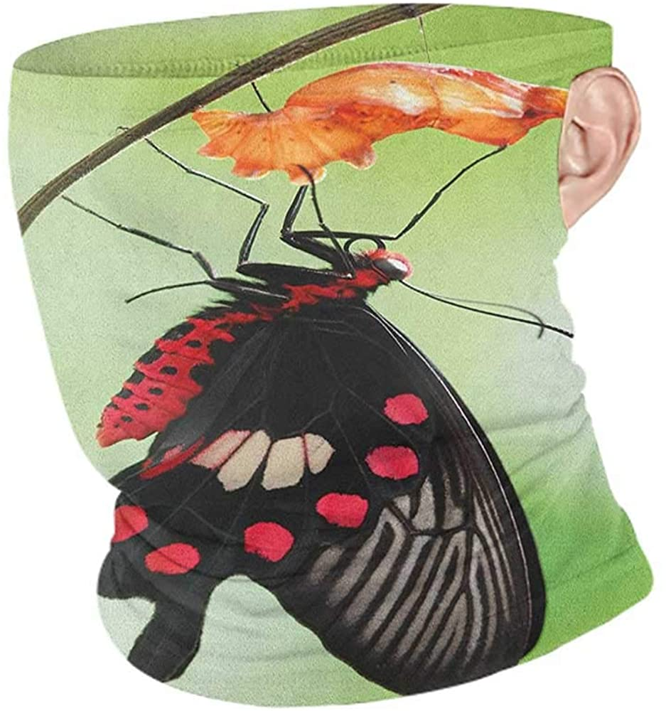Neck Gaiters Summer Swallowtail Butterfly Amazing Moment Coming Out of Cocoon Chrysalis Transformation,Unisex Anti-Dust Washable Red Black Green 10 x 12 Inch