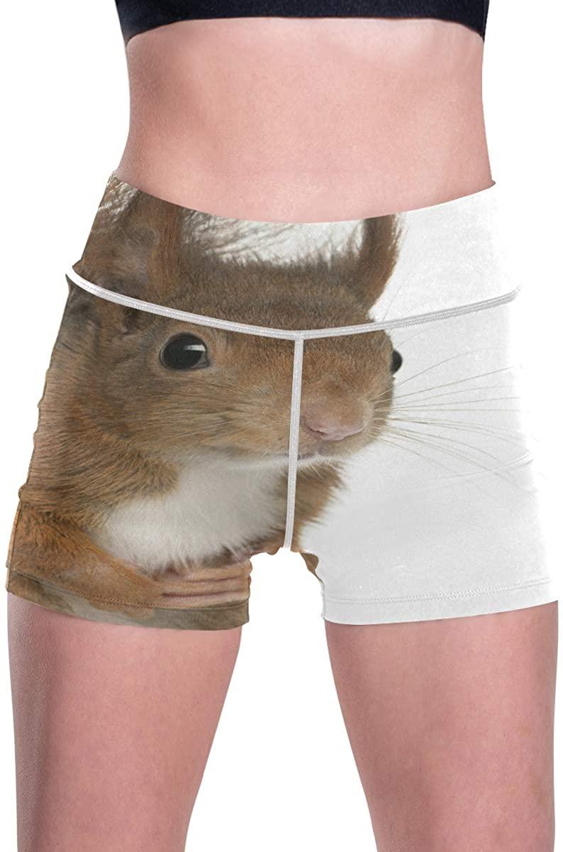SLHFPX Eurasian Red Squirrel Cute Sciurus Vulgaris Womens Workout Yoga Short Pants Active Running Shorts Pocket