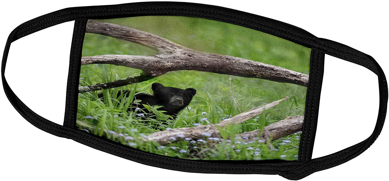 3dRose Danita Delimont - Black Bear - Tennessee, Great Smoky Mountains National Park. Black Bear cub. - Face Masks (fm_251413_2)