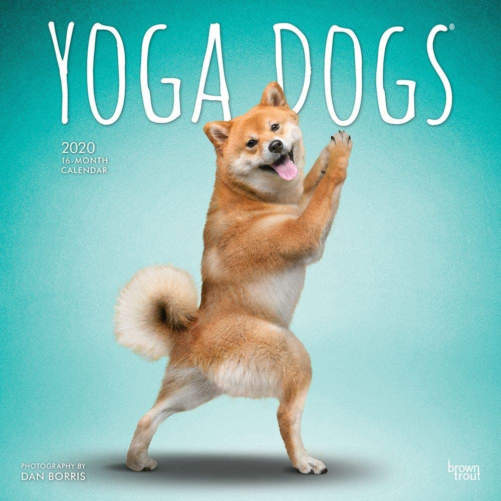 BrownTrout, Yoga Dogs Wall Calendar 2020