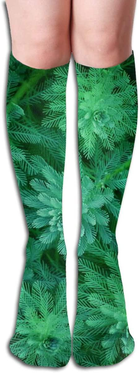 Plant Nature Leaf,Design Elastic Blend Long Socks Compression Knee High Socks (50cm) for Sports