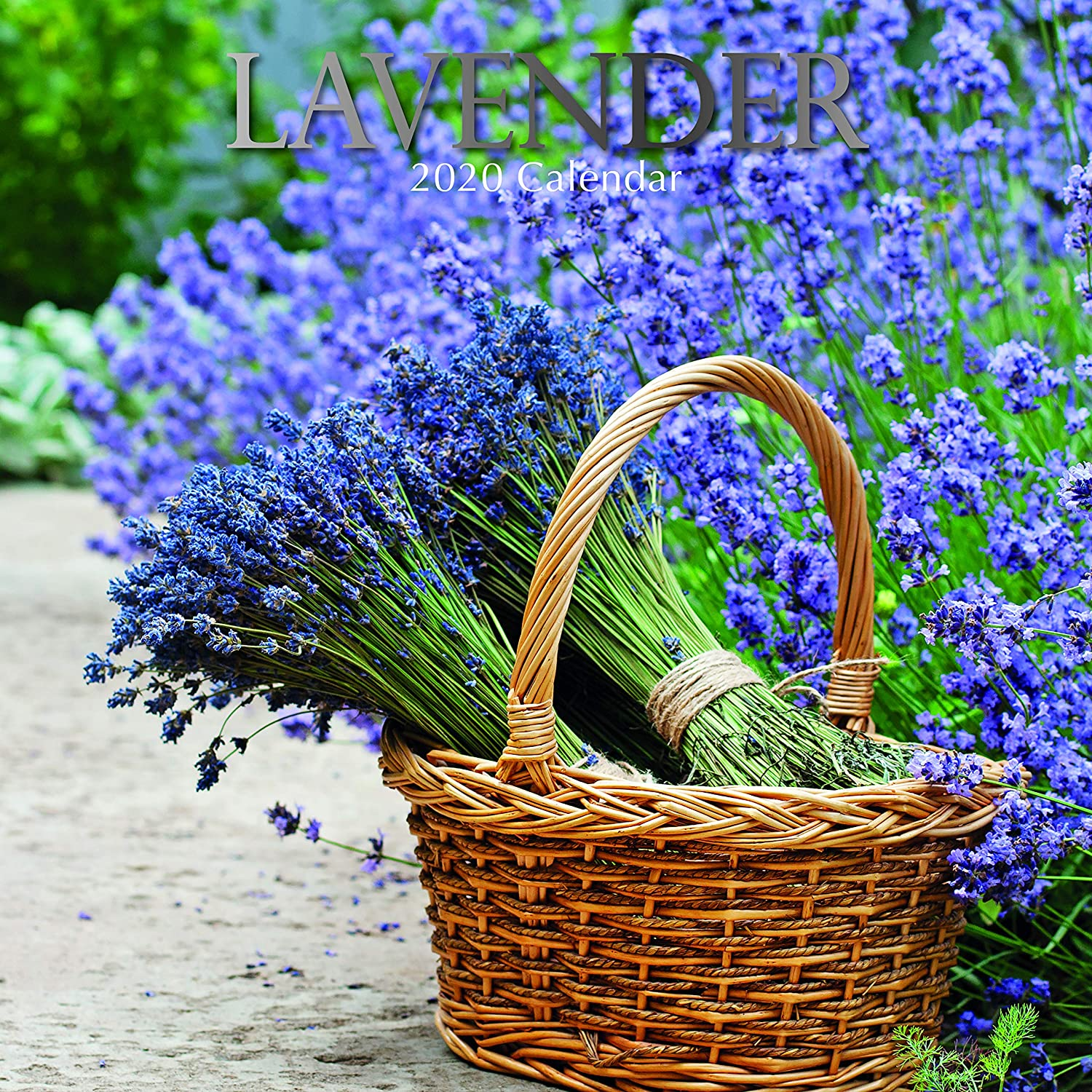 2020 Wall Calendar - Lavender Calendar, 12 x 12 Inch Monthly View, 16-Month, Blooms and Flowers Theme, Includes 180 Reminder Stickers