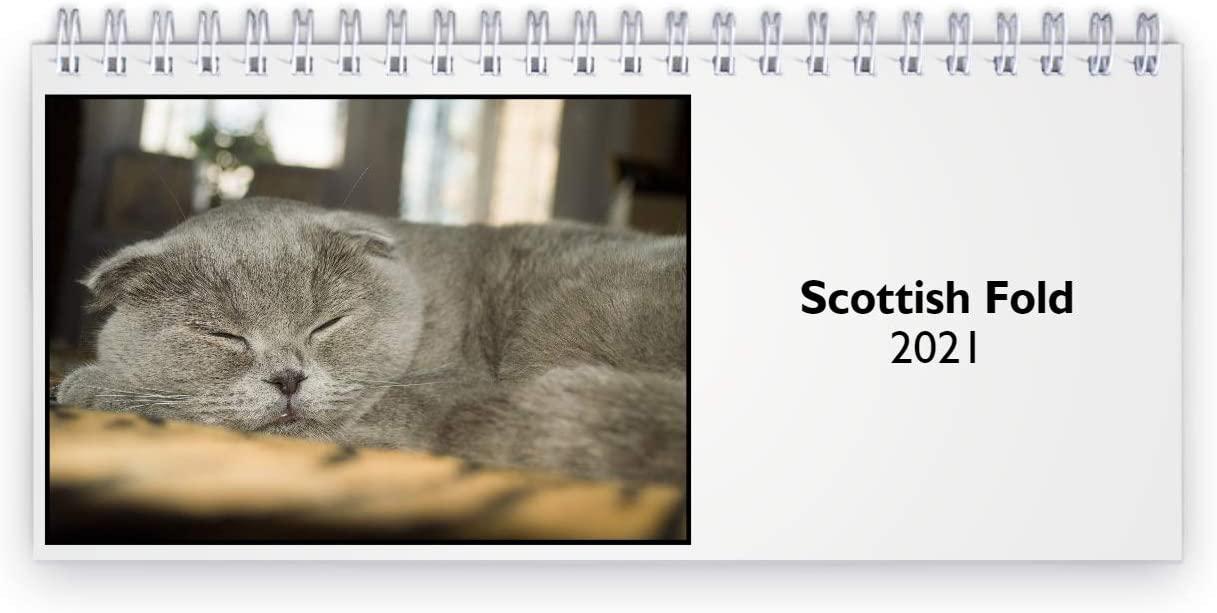Scottish Fold 2021 Desk Calendar