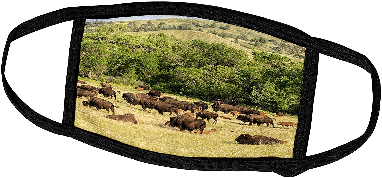 3dRose Danita Delimont - Bison - USA, South Dakota, Custer State Park. Bison Herd in Field. - Face Masks (fm_260009_3)