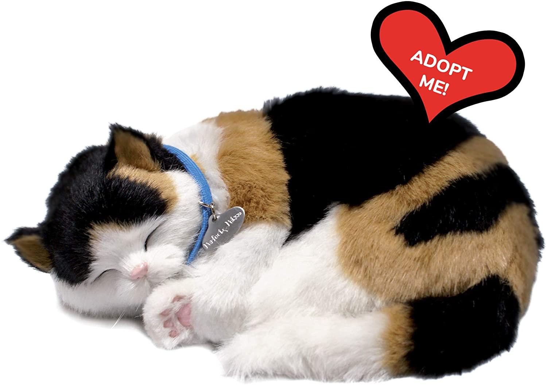 Perfect Petzzz Kitten