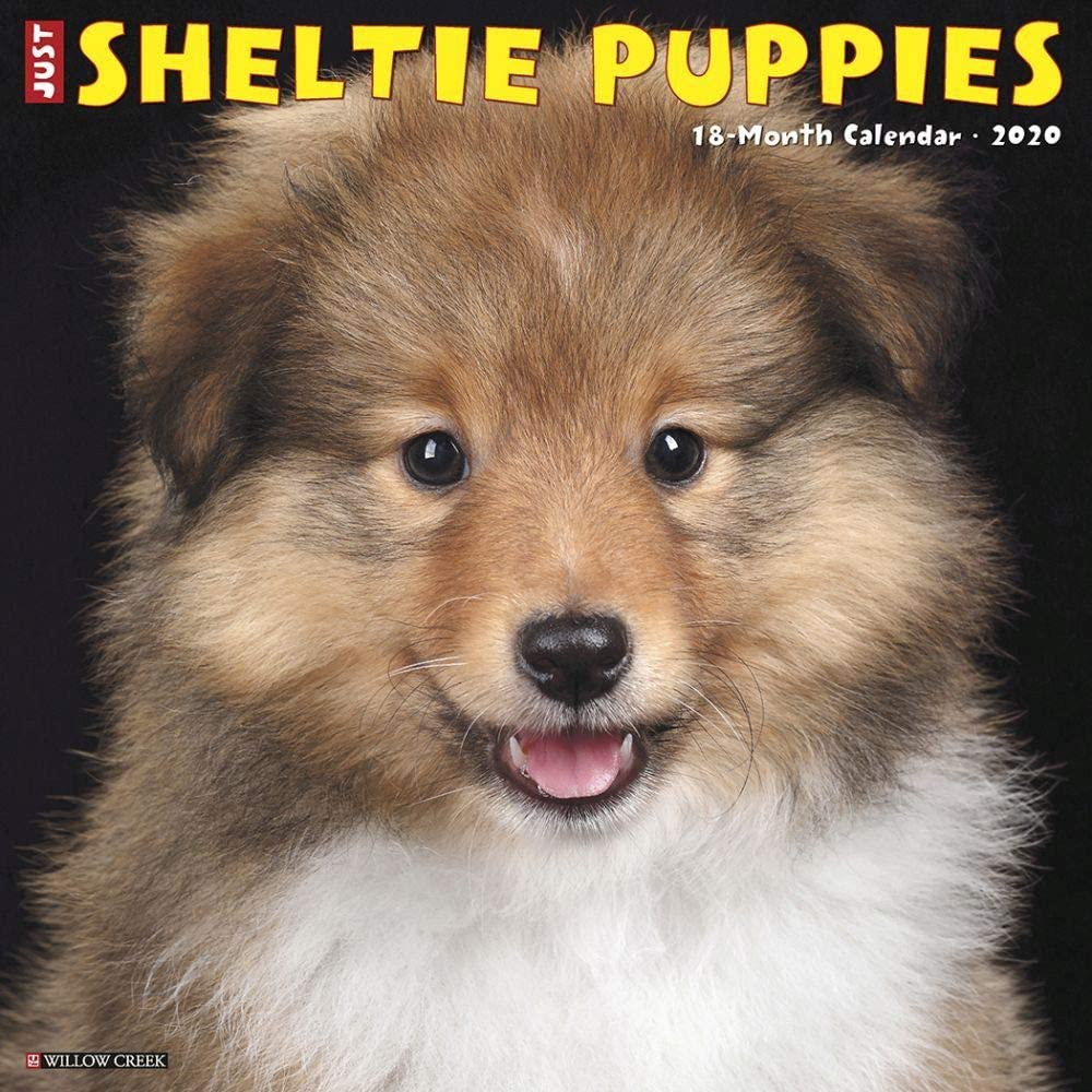 Willow Creek Press, Just Sheltie Puppies Wall Calendar 2020