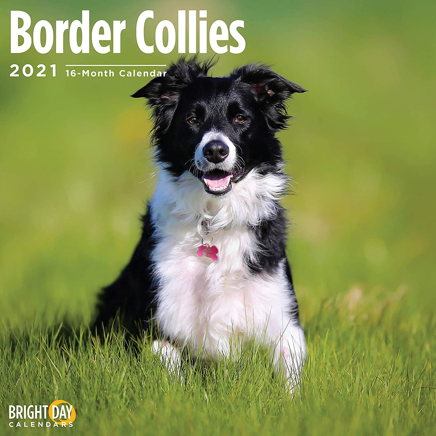 2021 Border Collies Wall Calendar by Bright Day, 12 x 12 Inch, Cute Dog Puppy