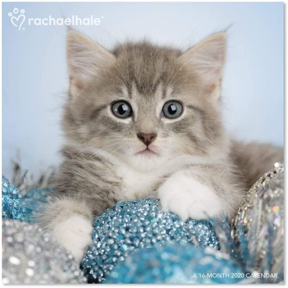 2020 Rachael Hale Cats Wall Calendar (DDD5832820)