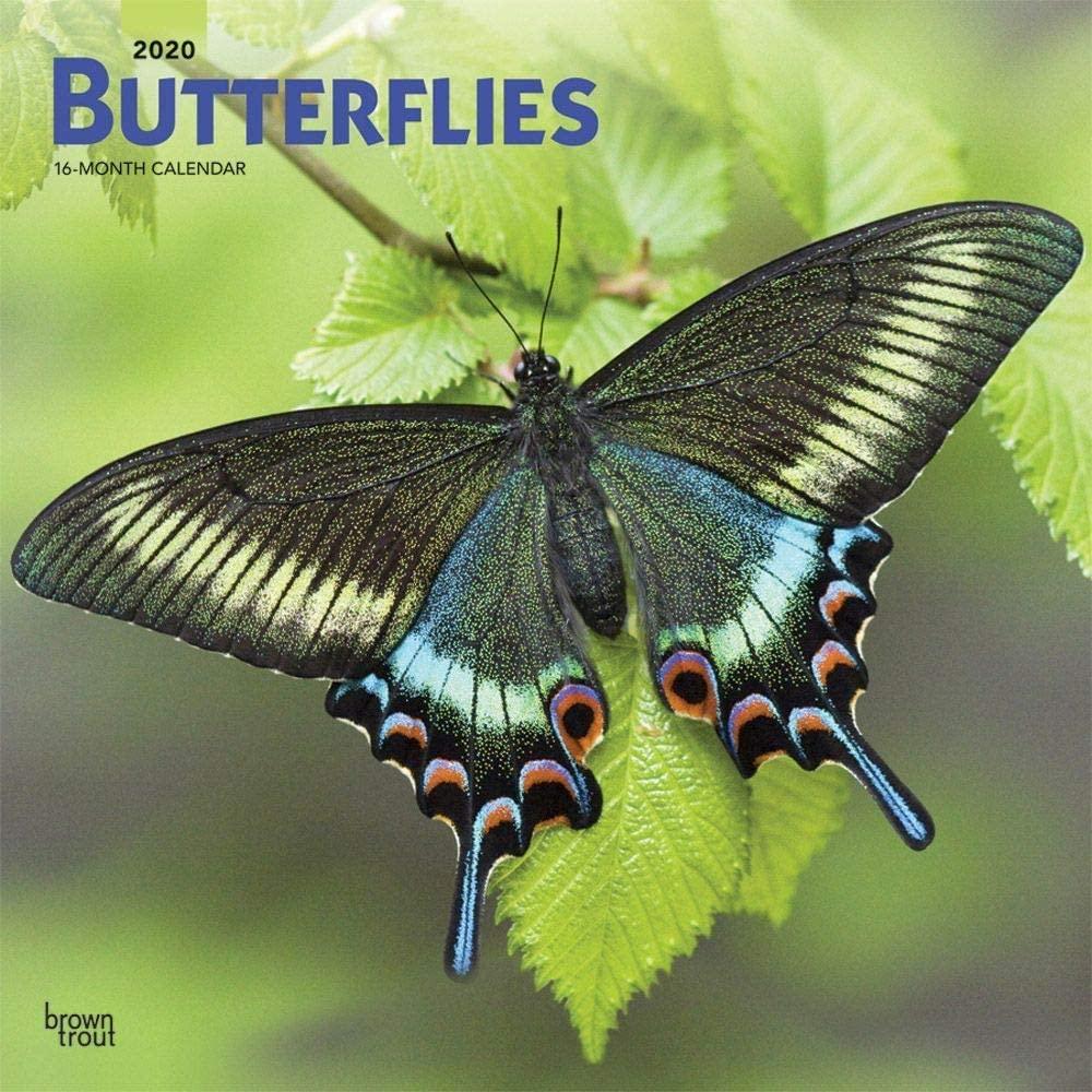 BrownTrout, Butterflies Wall Calendar 2020