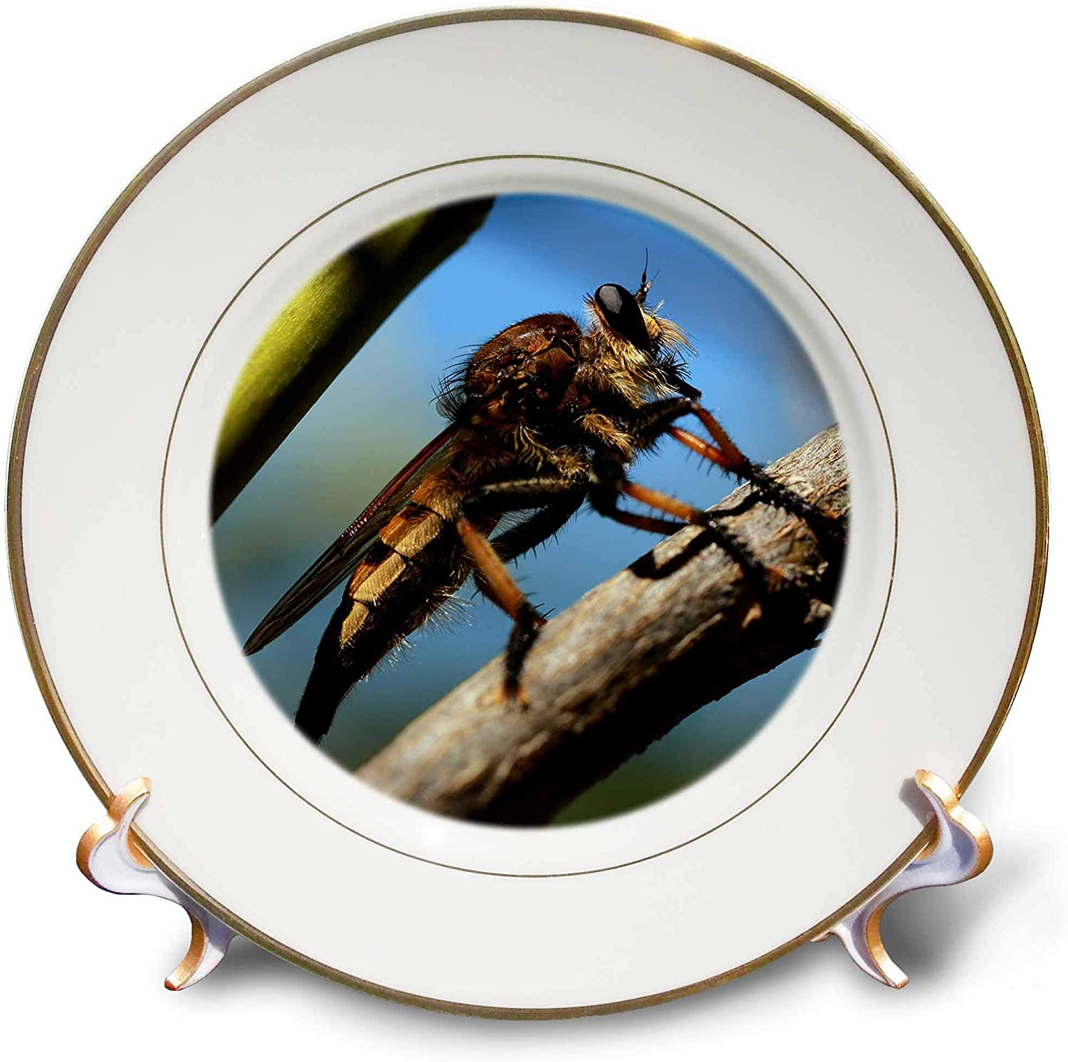 3dRose Stamp City - Insects - Macro Photograph of a Robber Fly Waiting for its Next Meal. - 8 inch Porcelain Plate (cp_325137_1)