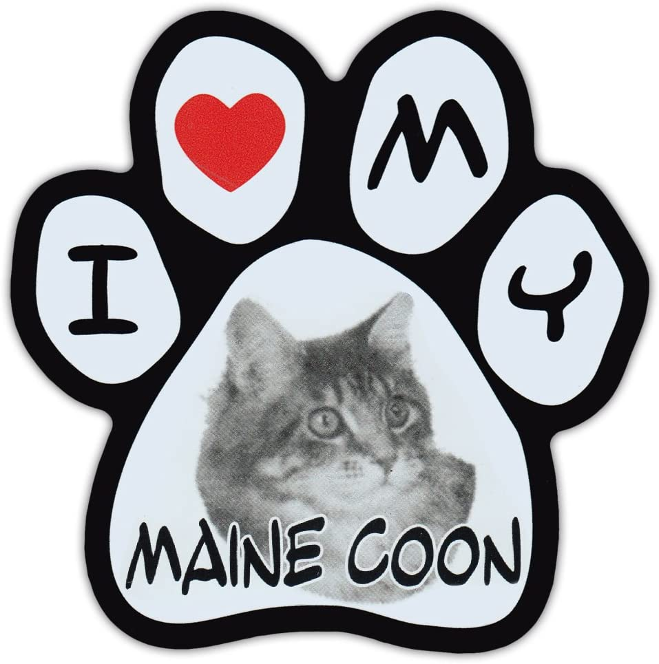 Picture Cat Paw Shaped Car Magnet - Maine Coon - Magnetic Bumper Sticker