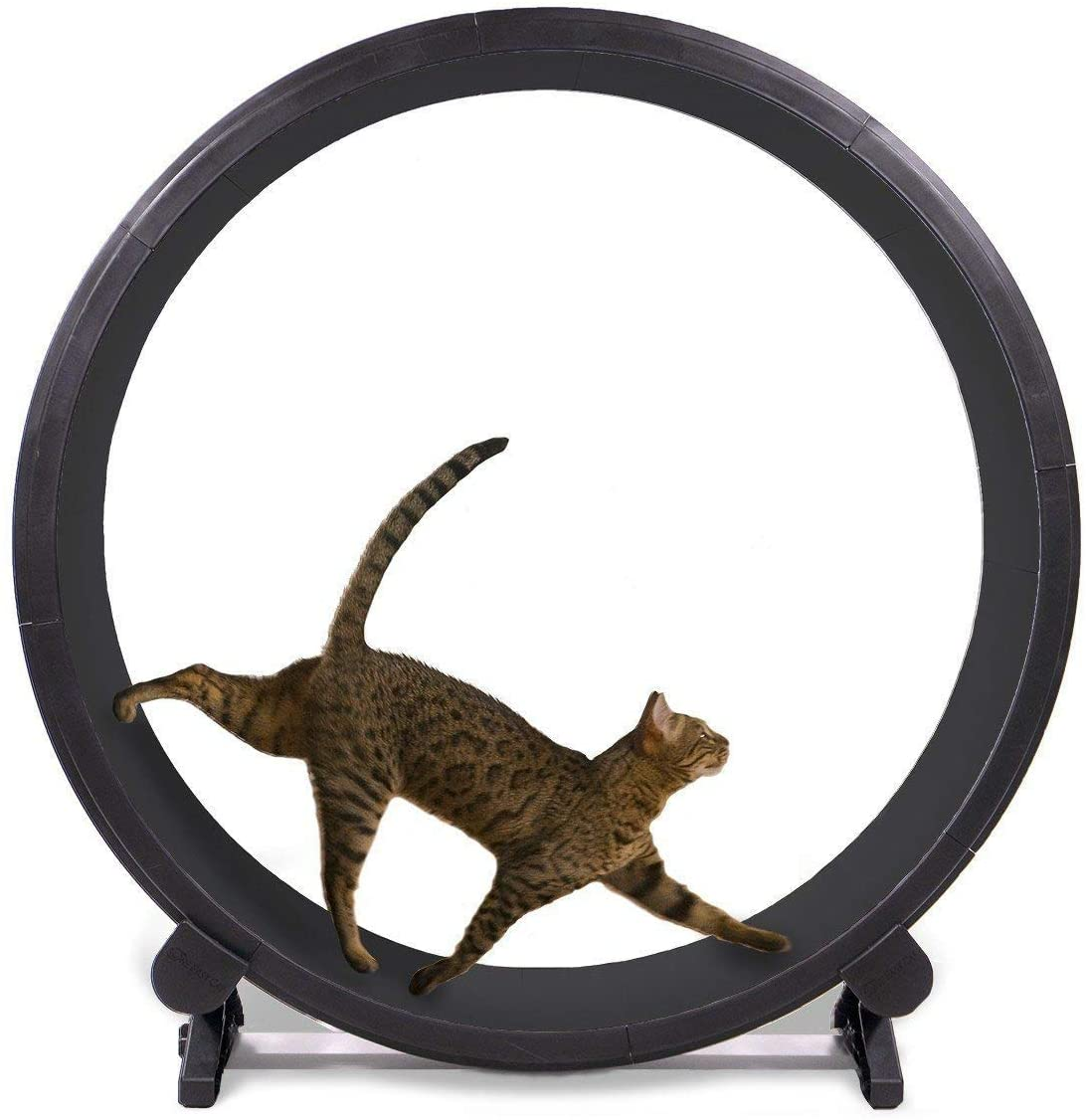 One Fast Cat Exercise Wheel - Black