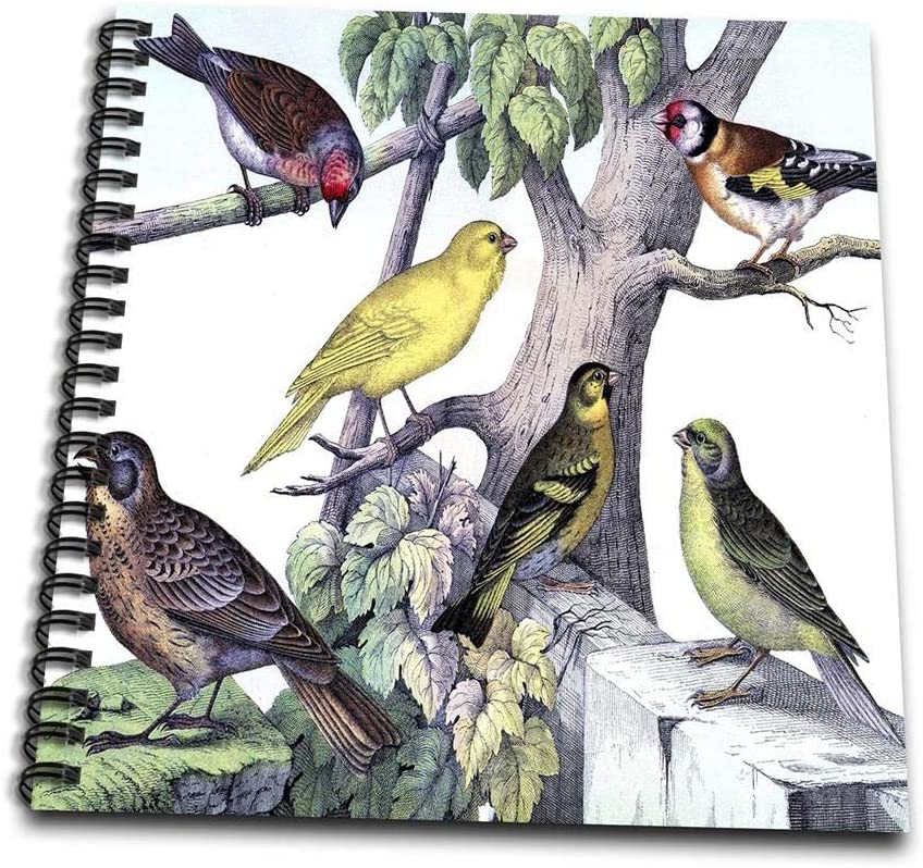 3dRose db_61886_1 1879 Natural History Print of 6 Birds on a Tree-Drawing Book, 8 by 8-Inch