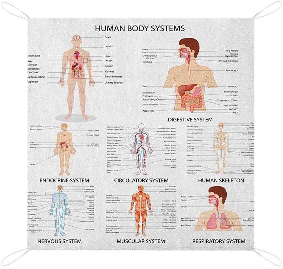 Human Anatomy Best Picnic Blankets, Complete Chart of Different Organ Body Structures Cell Life Medical Illustration Sand Proof Mat for Travel, 67