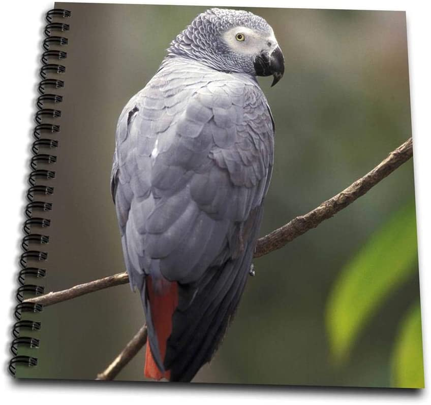 3dRose African Gray Parrot, Tropical Bird - NA02 AJE0248 - Adam Jones - Mini Notepad, 4 by 4-inch (db_83574_3)