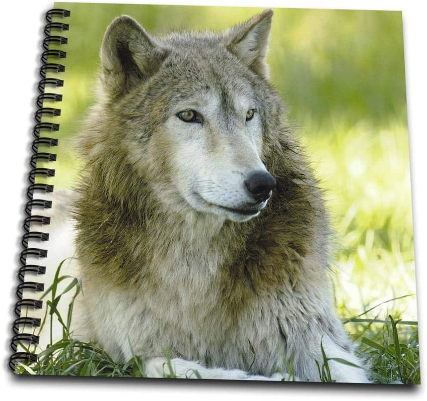 3dRose db_97514_3 Gray Wolf, Timber Wolf. Bear World, Wyoming. USA-US51 POX0035-Pete Oxford-Mini Notepad, 4 by 4