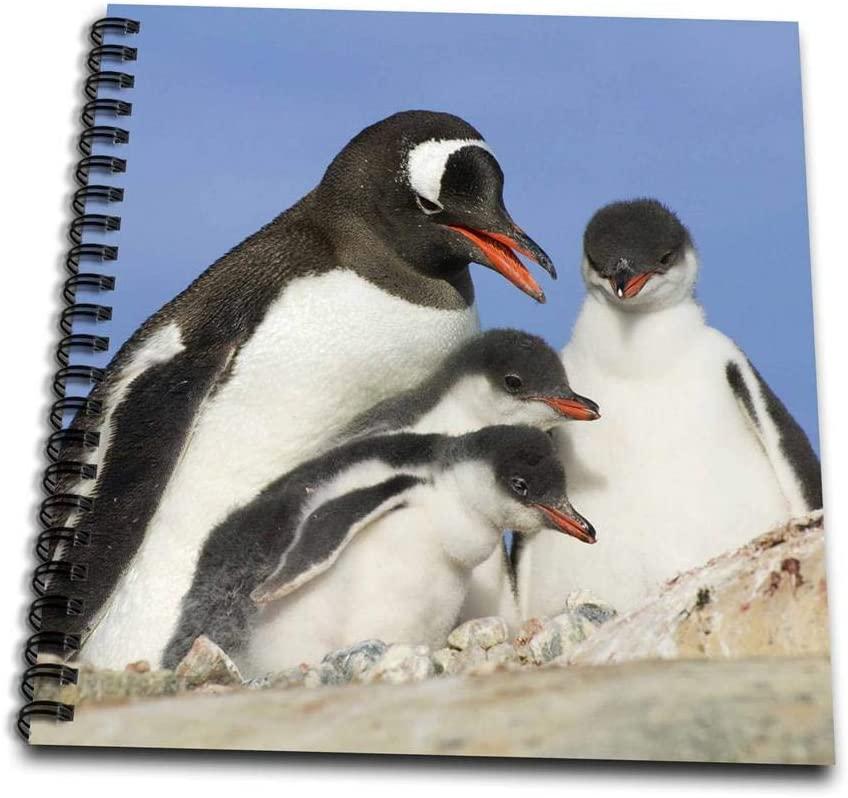 3dRose db_74174_3 Gentoo Penguins, Neko Harbor, Antarctica-AN01 KSU0210-Keren Su-Mini Notepad, 4 by 4