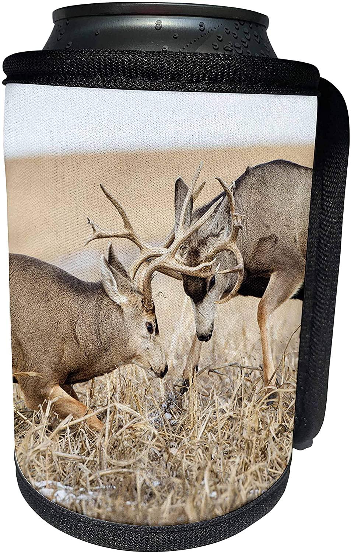 3dRose Danita Delimont - Deer - Mule Deer, Odocoileus hemionus, bucks fighting during rut - Can Cooler Bottle Wrap (cc_259125_1)