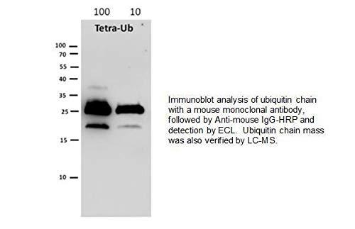 6420-25 - - K63-linked Tetra-Ubiquitin, BioVision - Each (25µG)