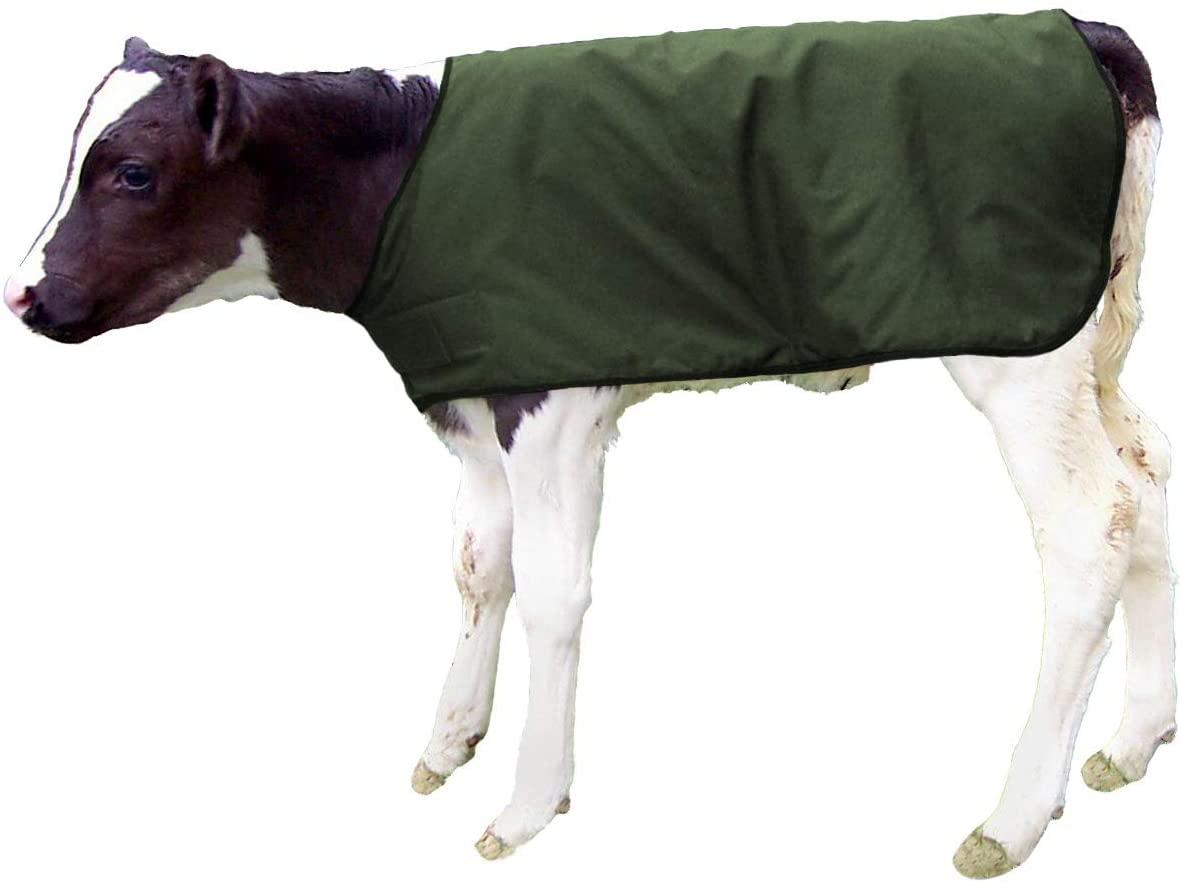 Bettermilk Calf Coats Waterproof Livestock Protector Pro Calf Blanket - Large Holstein Size - Green