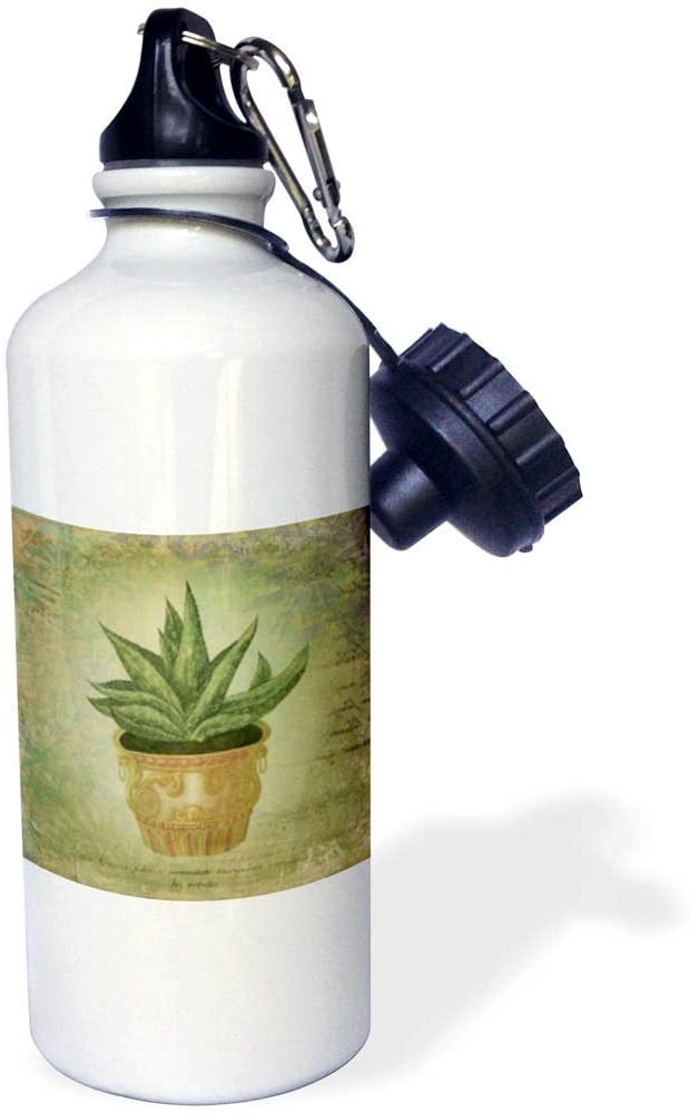 3dRose Andrea Haase Vintage Illustration - Collage Style Vintage Illustration of Cactus Succulent in A Pot - 21 oz Sports Water Bottle (wb_318572_1)