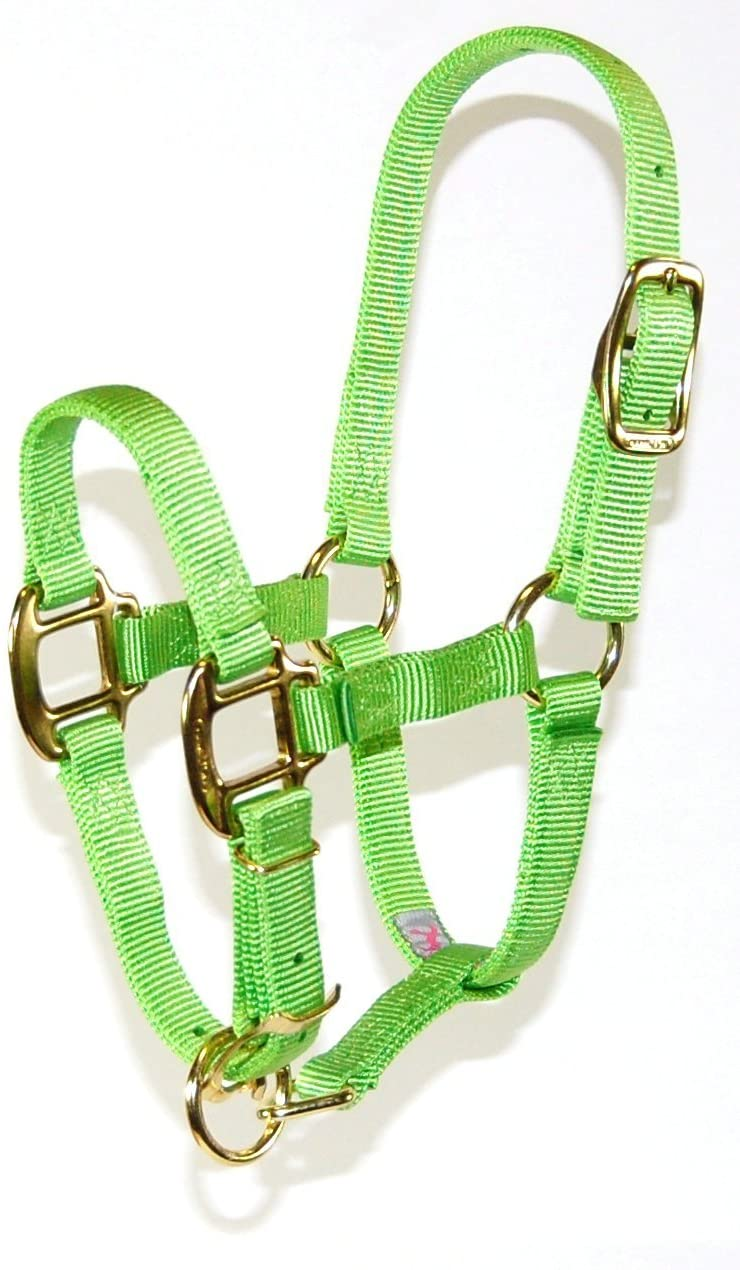 Hamilton 3/4 Adjustable Quality Horse Halter, 200 to 300-Pound Weanling, Lime
