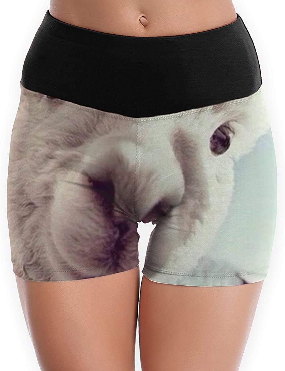 CHEERPEACETIME Womens Yoga Shorts Pants Cute Alpacas Llamas Design High Waist Athletic Leggings