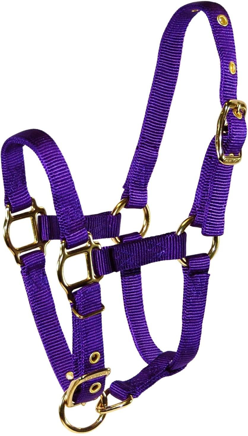 Hamilton Adjustable Miniature Nylon Horse Halter, Average, Purple