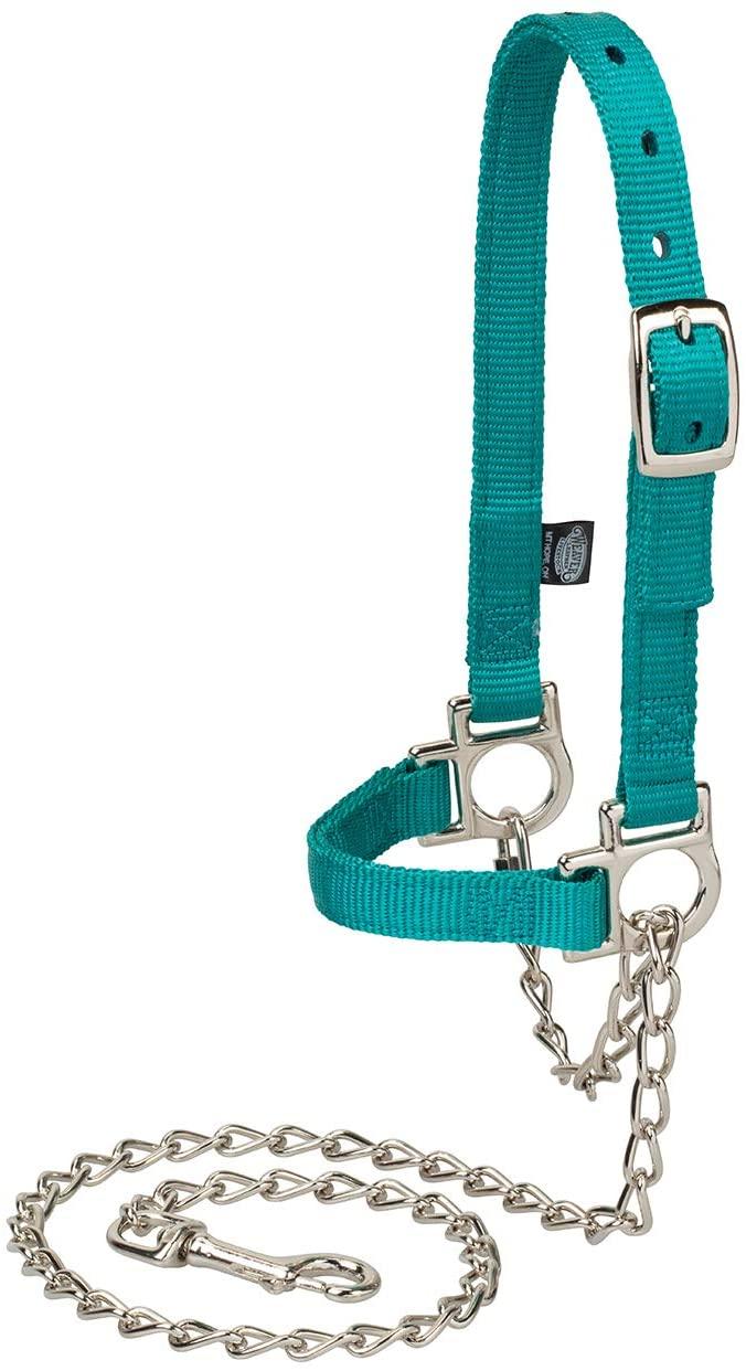 Weaver Livestock Nylon Adjustable Sheep Halterwith Chain Lead, Teal, Model Number: 35-8111-49