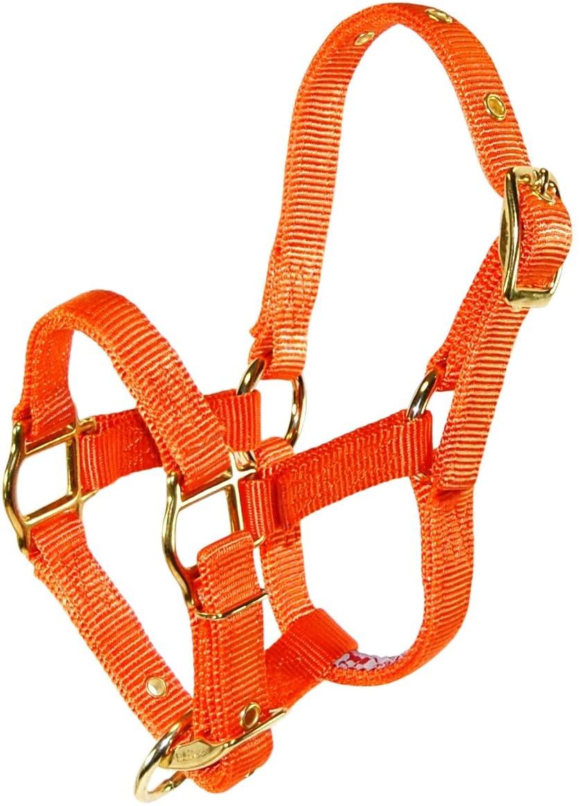 Hamilton Adjustable Miniature Nylon Horse Halter, Average, Mango Orange