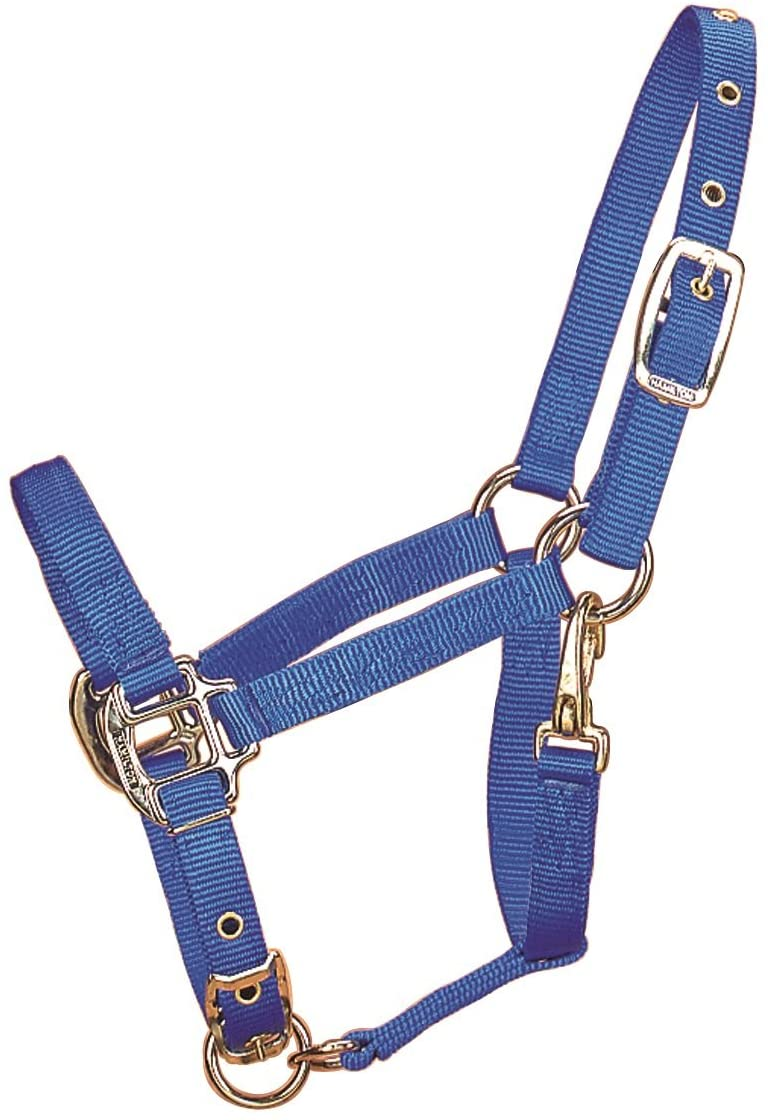 Hamilton Halter Company 347523 Adjustable Chin Horse Halter with Snap Blue, Weanling