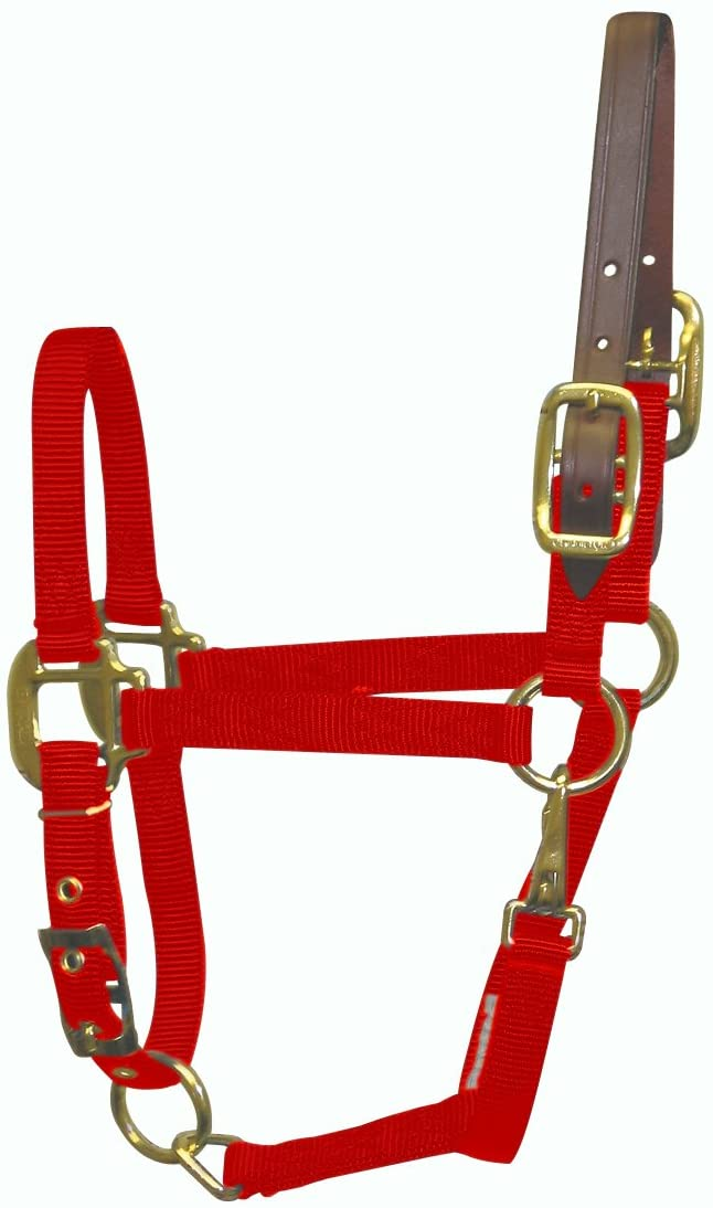 Hamilton 3/4 Nylon Adjustable Horse Halter with Leather Head Poll and Throat Snap, Pony