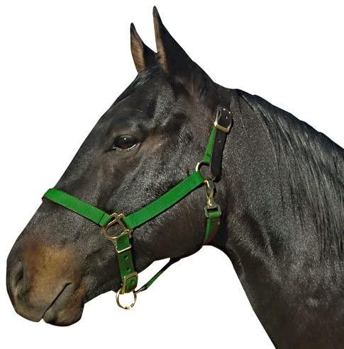 Intrepid International Leather Crown Horse Halter