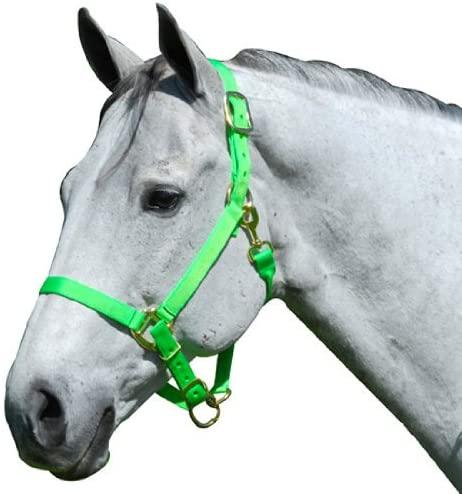 Intrepid International Nylon Horse Halter