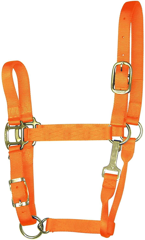 Hamilton 1-Inch Nylon Adjustable Quality Halter with Chin Snap for 800 to 1100-Pound Horse, Average, Mango Orange
