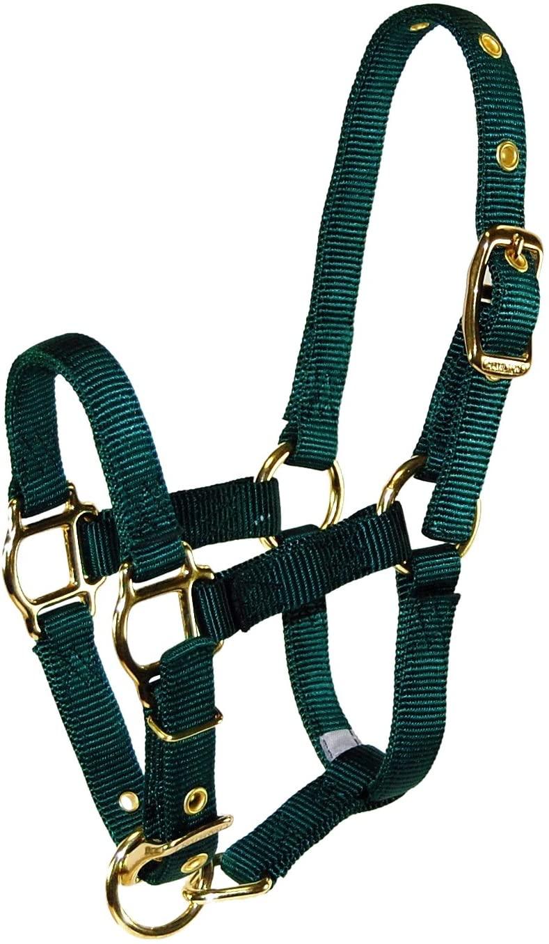 Hamilton Adjustable Miniature Nylon Horse Halter, Average, Dark Green