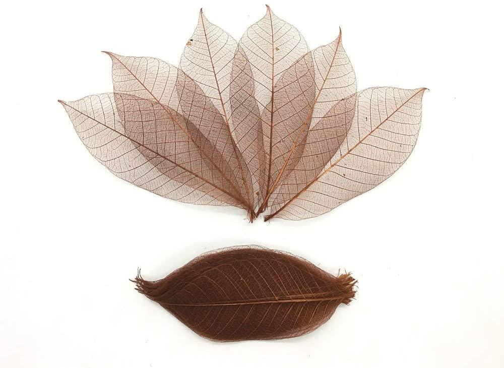 WADSUWAN SHOP 100 Brown Color Skeleton Leaves Rubber Tree Natural Scrapbooking Craft DIY Card Wedding