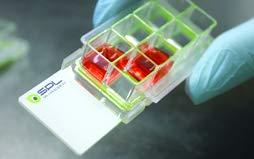 SPL Cell Culture Chamber Slide, Clear, 8 Wells, PS Frame, Flux Slide, PP Holder, 0.2~0.6 ml, TC Treated Sterile, Case of 12 // 2 Pack of 6