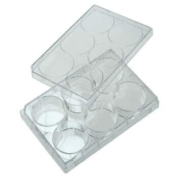 CELLTREAT Scientific Products 229506 6-Well Cell Culture Plate with Lid; 100/cs