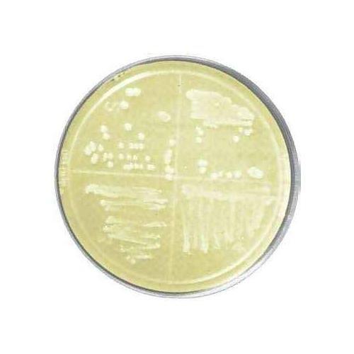bioWORLD 30630065-3 Murashige and Skoog (MS) Medium with Modified Vitamins, 1x25 L