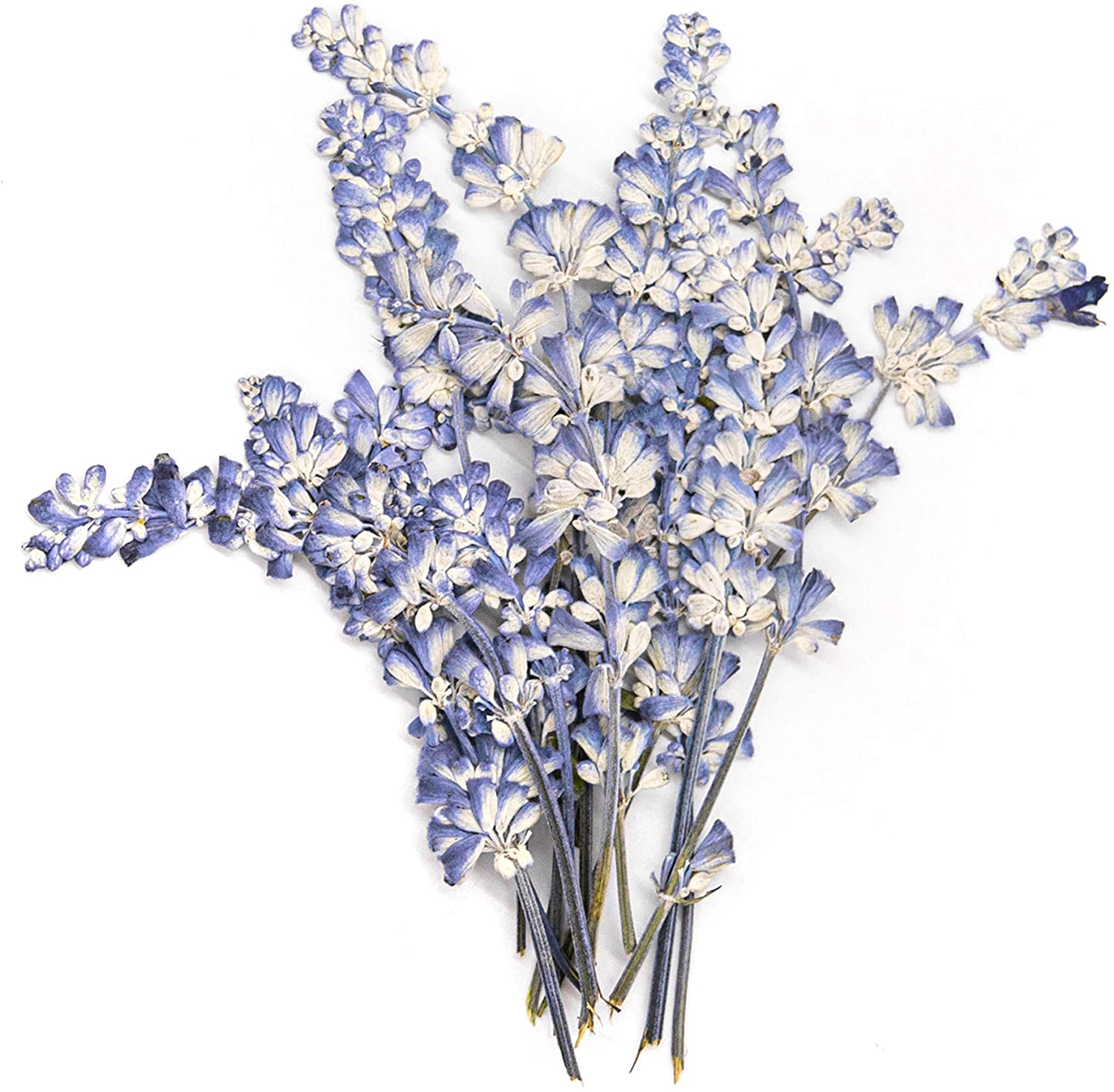AUEAR, 16 PCS Real Dried Flower Sage Flowers Natural Dried Flowers Pressed Flower Scrapbooking Embellishments