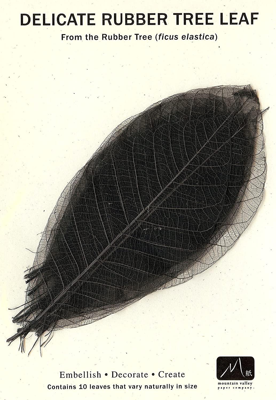 BLACK RUBBER TREE LEAVES - Pack of 10 skeleton leaves