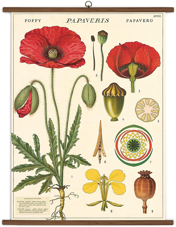 Cavallini Papers Botany Vintage School Chart