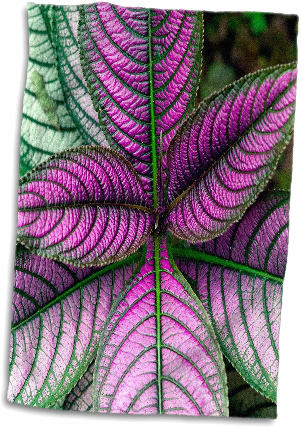 3D Rose Persian Shield Plant-Strobilanthes Dyerianus-Costa Rica Hand Towel, 15