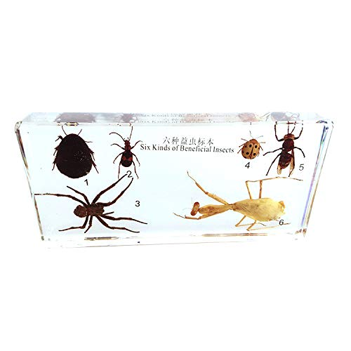 Cherish XT 6 Kinds Beneficial Insects Specimen Desk Paperweight Science Education Taxidermy Include Mantis Spider Wasp Specimen