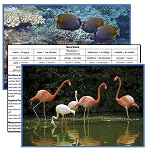 Animals Literacy Cards (Set of 8)