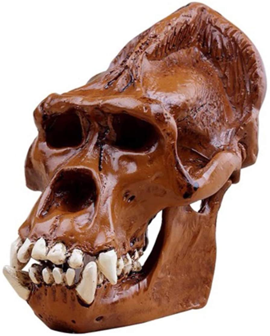 LXX Orangutan Skull Model - Resin Figurine Desk Scientific Sculpture - Detachable Medical Teaching Model,Scientific Educational Toy
