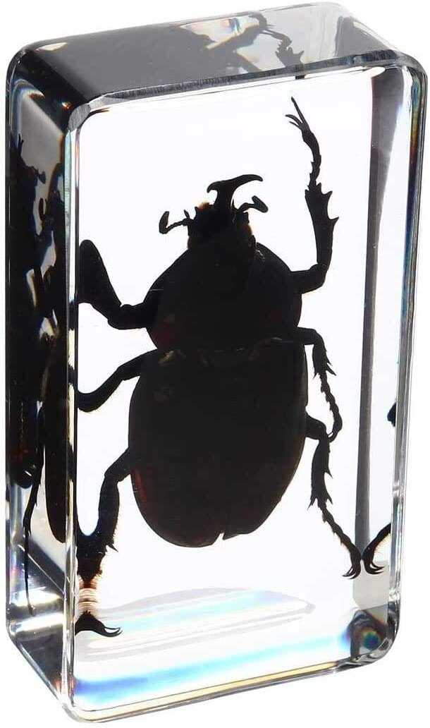 YYANG Clear Lucite Insect Specimen Scorpions Rhinoceros Beetle Craft Sample Children School Educational Biological Collection Specimen ( Color : 2 )