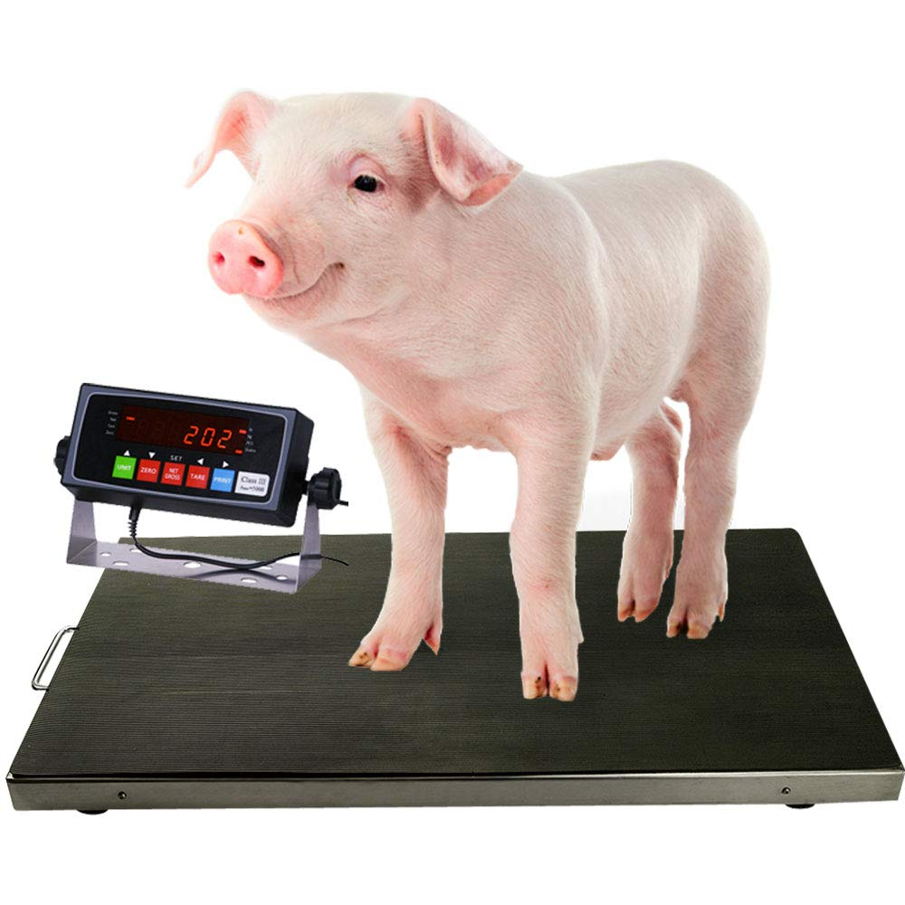 PEC Scales 700lbs Vet Animal Scale/Livestock Scale, Digital Weighing Equipment for Small to Medium Sized Animals Calf/Goat/Sheep/Pigs/Dogs/Cat or Pets (38″ x 20″ x 2″)