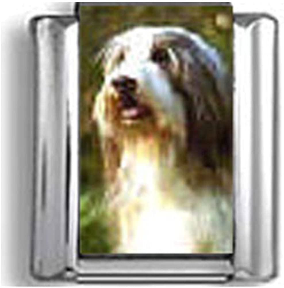 Bearded Collie Italian charm